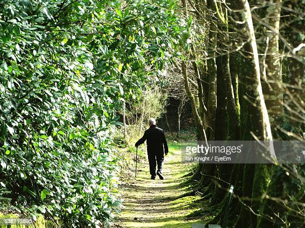 Rear View Of Man Walking On Pathway Amidst Trees