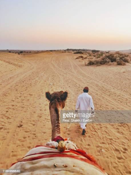 rear view of man walking with camel on sand in desert - chameau photos et images de collection
