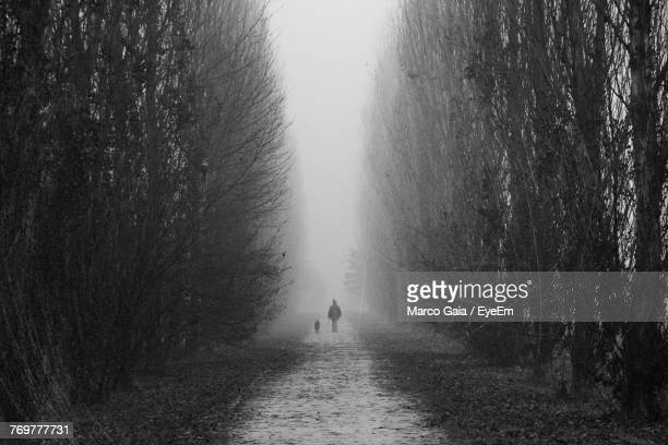Rear View Of Man Walking With Dog Amidst Bare Trees During Winter