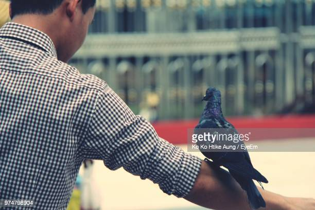 rear view of man with pigeon perching on hand - ko ko htike aung stock pictures, royalty-free photos & images