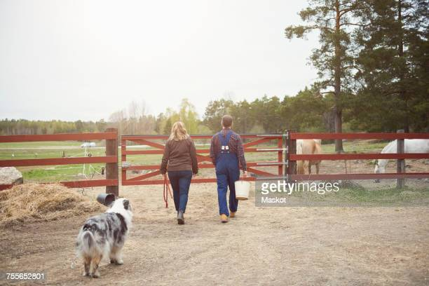 Rear view of mature couple walking towards gate in farm