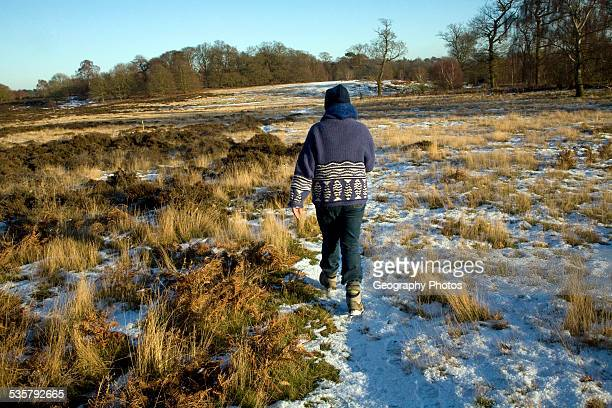 Rear view of mature woman walking across heathland with covering of snow, Suffolk, England.