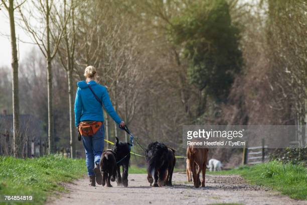 Rear View Of Mature Woman With Dogs Walking On Road
