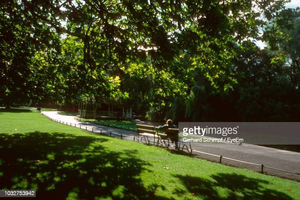 rear view of men sitting on bench at park - gerhard schimpf stock photos and pictures