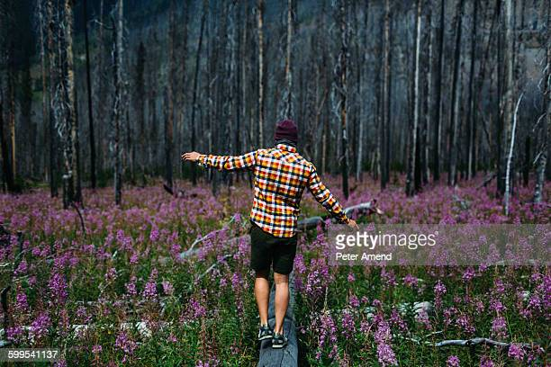 Rear view of mid adult man balancing on fallen tree in field of wildflowers, Moraine lake, Banff National Park, Alberta Canada