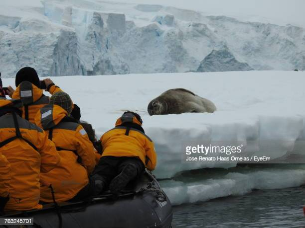 rear view of people in lake by mammal on field during winter - foca imagens e fotografias de stock