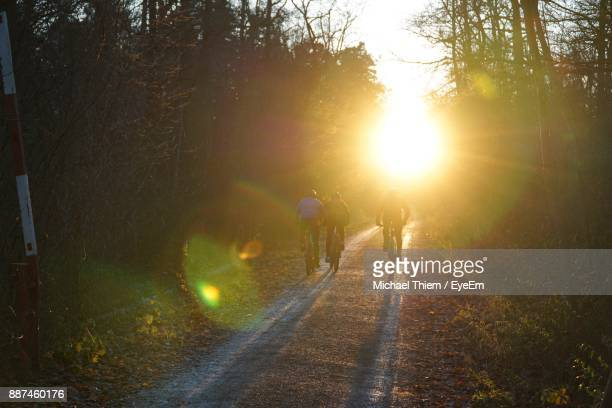 rear view of people riding bicycles on road amidst trees during sunset - thiem stock-fotos und bilder