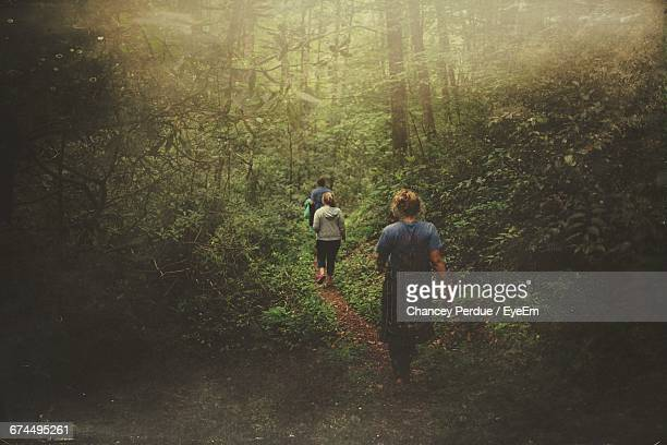 rear view of people walking amidst trees in forest - pigeon forge stock pictures, royalty-free photos & images