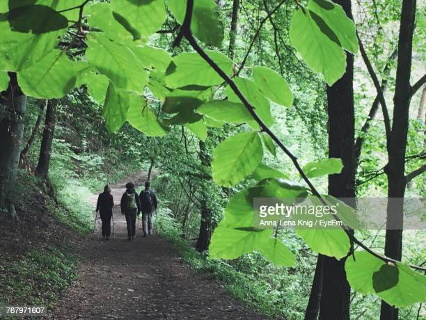Rear View Of People Walking At Forest