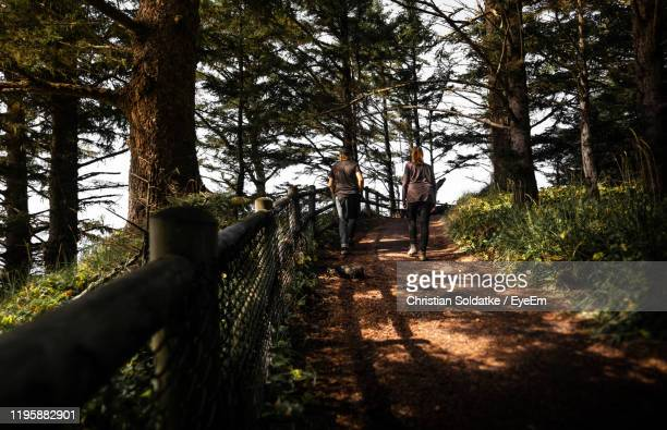 rear view of people walking on footpath amidst trees in forest - christian soldatke stock pictures, royalty-free photos & images