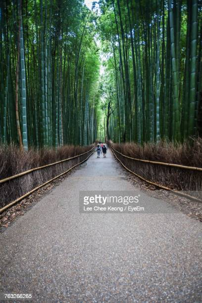 Rear View Of People Walking On Walkway Amidst Bamboo Grove