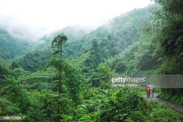 rear view of people with umbrellas walking in forest - rainy season stock pictures, royalty-free photos & images