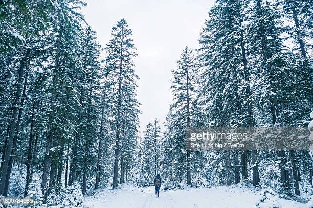 Rear View Of Person On Snow Covered Field Amidst Trees