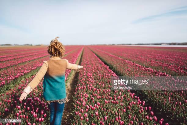 rear view of person standing on a pink tulip field against sky - bortes fotografías e imágenes de stock