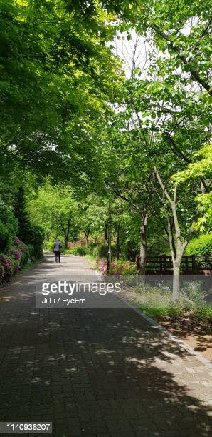rear view of person walking on footpath amidst trees - bucheon stock pictures, royalty-free photos & images