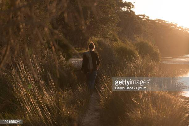 rear view of person walking on land golden hour - batemans bay stock pictures, royalty-free photos & images