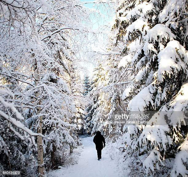 rear view of person walking on snow amidst trees - paulien tabak stock-fotos und bilder