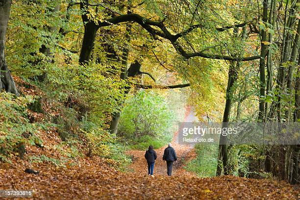 rear view of senior couple walking in autumn forest (xl) - woodland stock pictures, royalty-free photos & images