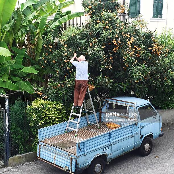 rear view of senior man gardening while standing on ladder in pick-up truck - old truck stock pictures, royalty-free photos & images
