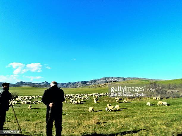 Rear View Of Shepherds With Sheep On Grassy Field Against Sky