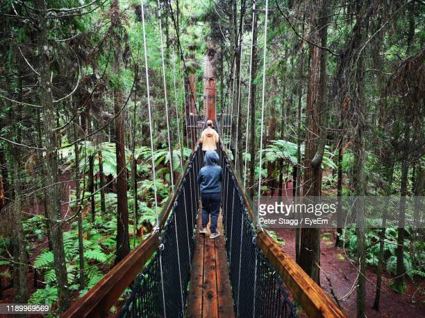 rear view of siblings walking on footbridge in forest - rotorua stock pictures, royalty-free photos & images