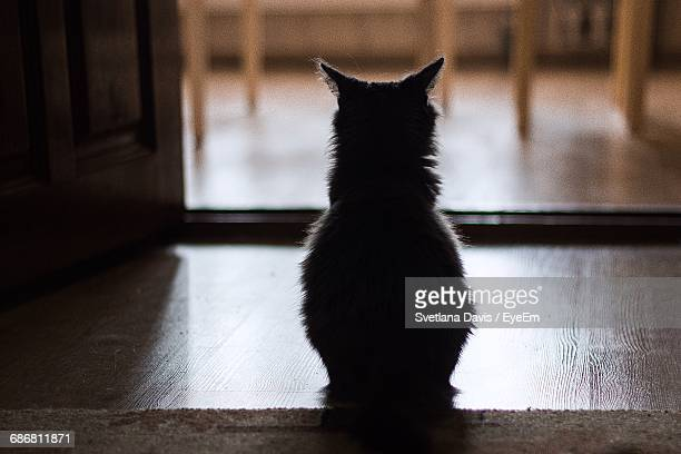 Rear View Of Silhouette Cat Sitting On Floor