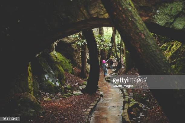 rear view of sisters walking on footpath amidst forest - chattanooga stock pictures, royalty-free photos & images