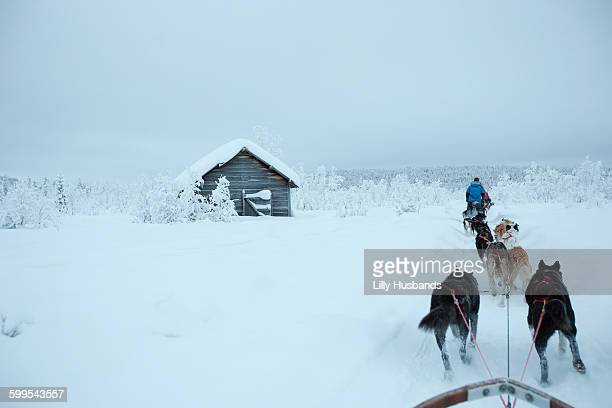 rear view of sled dogs on snowcapped landscape against sky - dog sledding stock photos and pictures