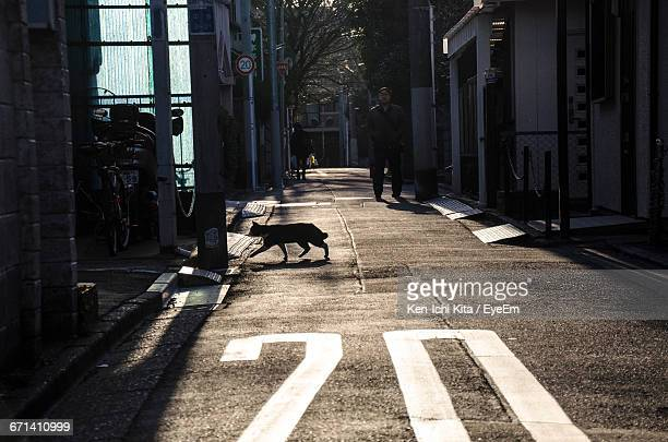 Rear View Of Stray Cat Walking On Footpath In City