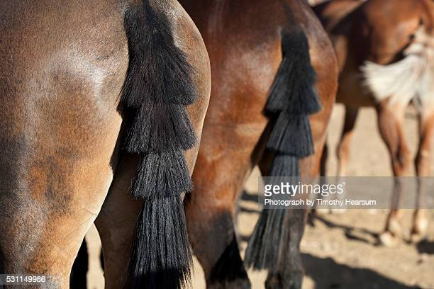 rear view of three mules - timothy hearsum stock pictures, royalty-free photos & images
