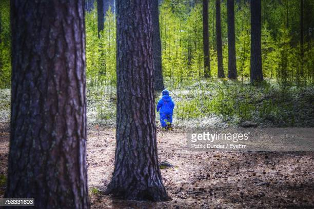 Rear View Of Toddler Walking Amidst Trees In Forest