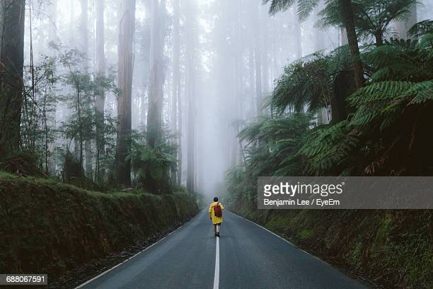 rear view of traveler walking on road in foggy forest - pursuit concept stock photos and pictures