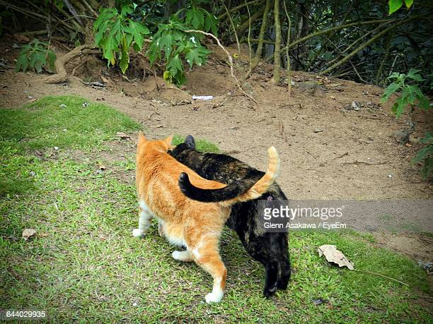 Rear View Of Two Cats Walking On Grass