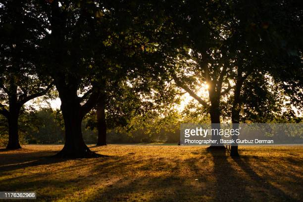 rear view of two unrecognizable people sitting on a bench in a beautiful park in london in a autumn afternoon - september stock pictures, royalty-free photos & images
