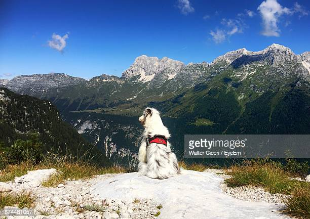 rear view of white dog on the top of the mountain - walter ciceri foto e immagini stock