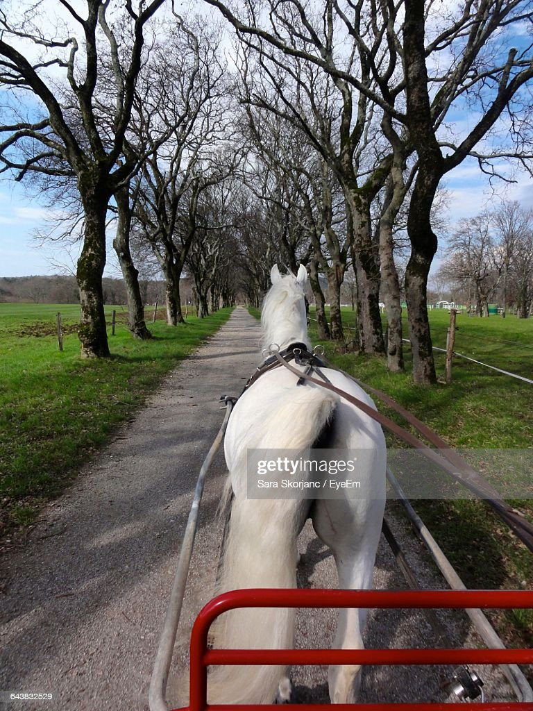 Rear View Of White Horse Standing On Road : Stock Photo