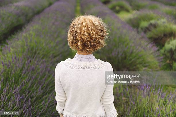 rear view of woman against a lavender field - bortes cristian stock photos and pictures