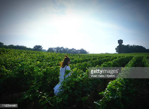 rear view of woman amidst crops on field against sky - reims stock pictures, royalty-free photos & images