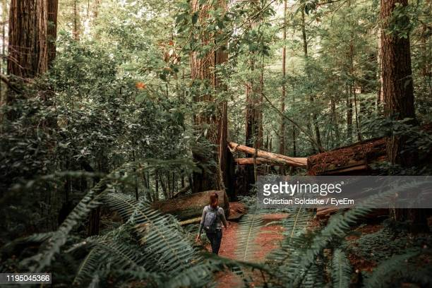 rear view of woman amidst trees in forest - christian soldatke stock pictures, royalty-free photos & images