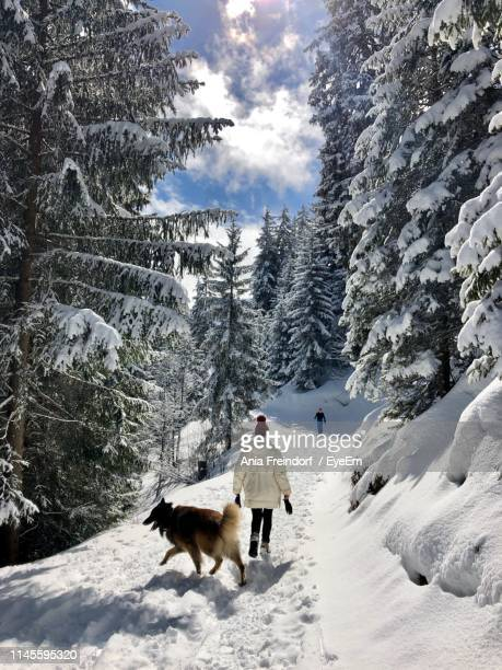 rear view of woman and dog on snow covered land in forest - courchevel stock pictures, royalty-free photos & images