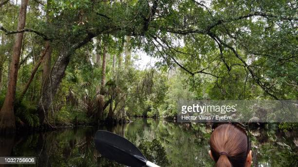 rear view of woman boating on lake amidst trees in forest - hector vivas fotografías e imágenes de stock