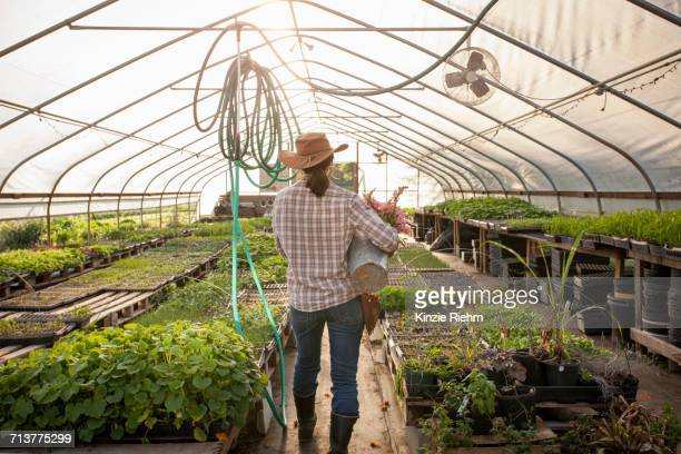 rear view of woman carrying bucket of snapdragons (antirrhinum) in flower farm poly tunnel - gainesville florida stock pictures, royalty-free photos & images