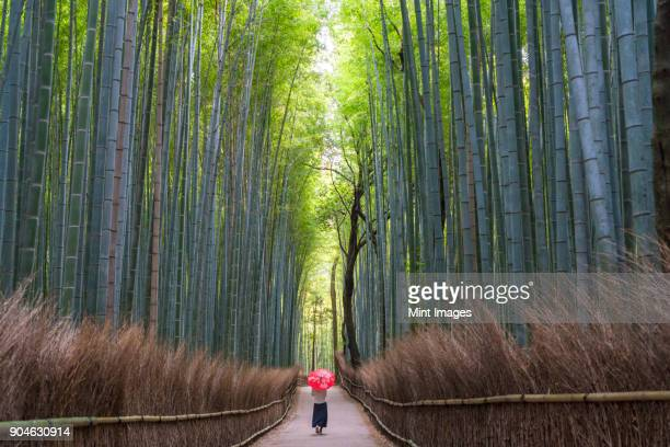 Rear view of woman carrying red traditional umbrella walking along a path lined with tall bamboo trees.