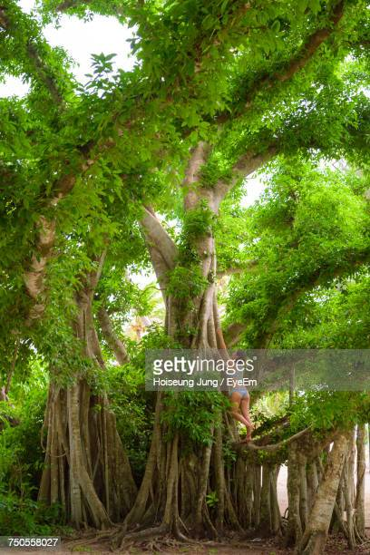 rear view of woman climbing tree in forest - saipan stock pictures, royalty-free photos & images