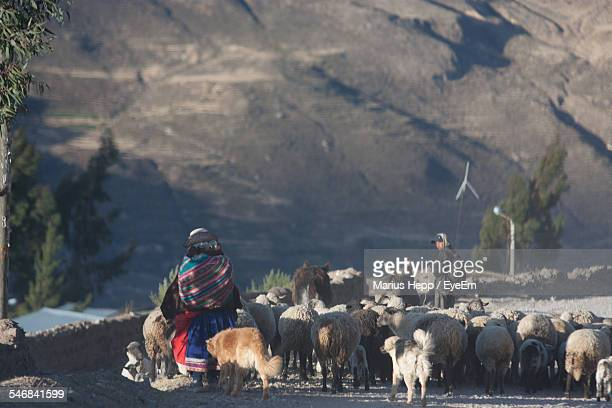 Rear View Of Woman Herding Sheep On Dirt Road
