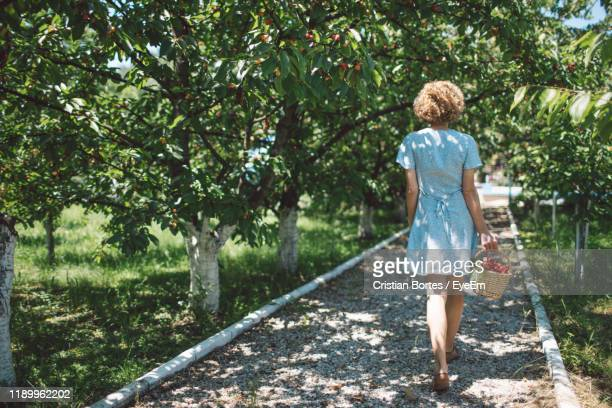 rear view of woman holding basket while standing on footpath - bortes stock photos and pictures