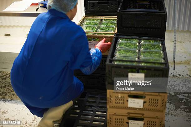 Rear view of woman in factory crouching stacking crates
