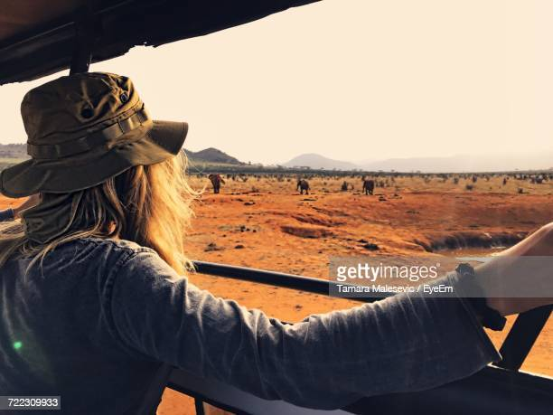 rear view of woman in off-road vehicle looking at elephants at national park - kenia fotografías e imágenes de stock