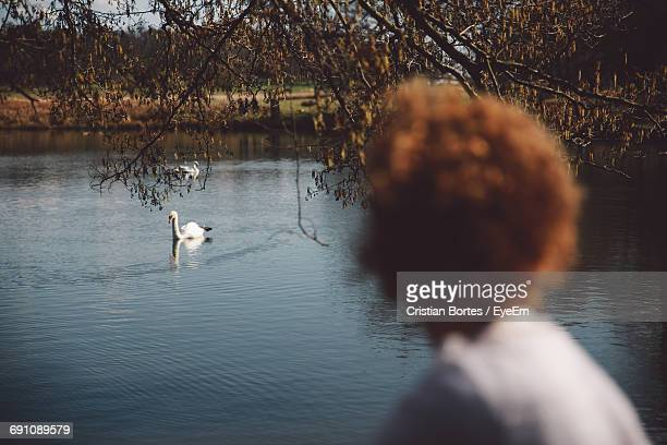 rear view of woman looking at swans swimming on lake in richmond park - bortes foto e immagini stock