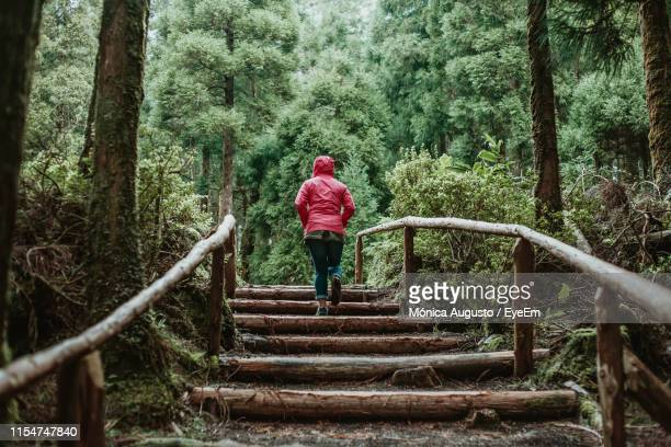 rear view of woman moving up on steps against trees in forest - mid adult women stock pictures, royalty-free photos & images